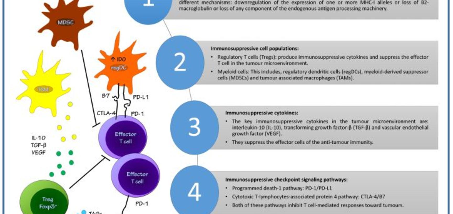2015 poster cancer immune system amina ismaeel